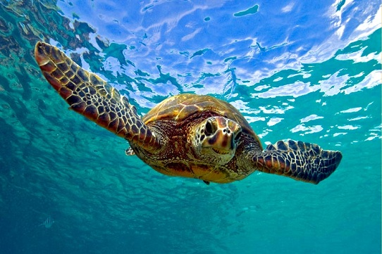 Akumal – Swimming With Turtles For Free?