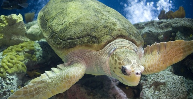 Save Endangered Sea Turtles from Deadly Gillnets