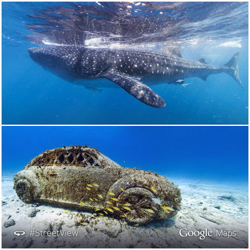 Google Adds Cancun, Isla Mujeres To Underwater Street View