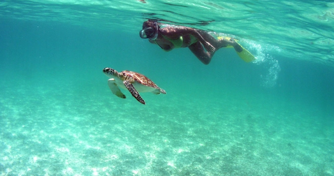 swimming with turtles in Akumal